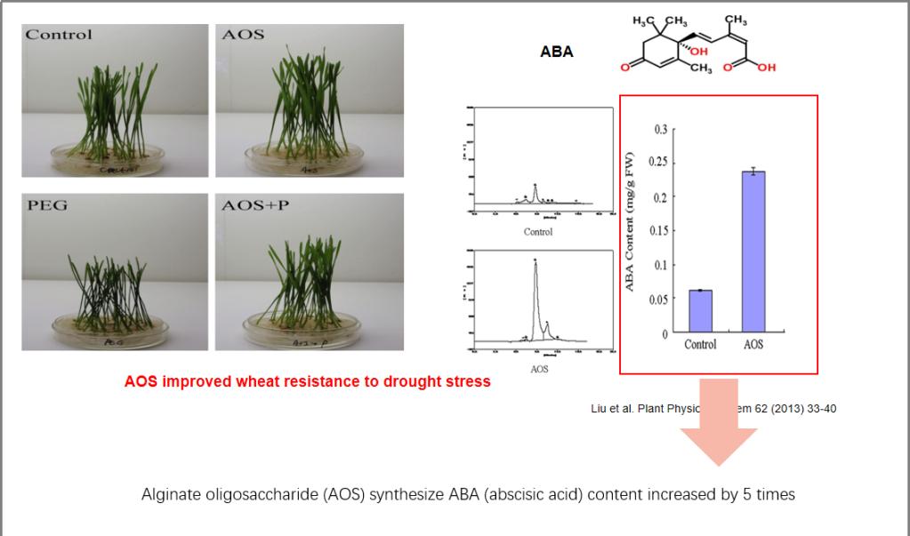 Alginate oligosaccharides Induces plants to synthesize ABA and JA